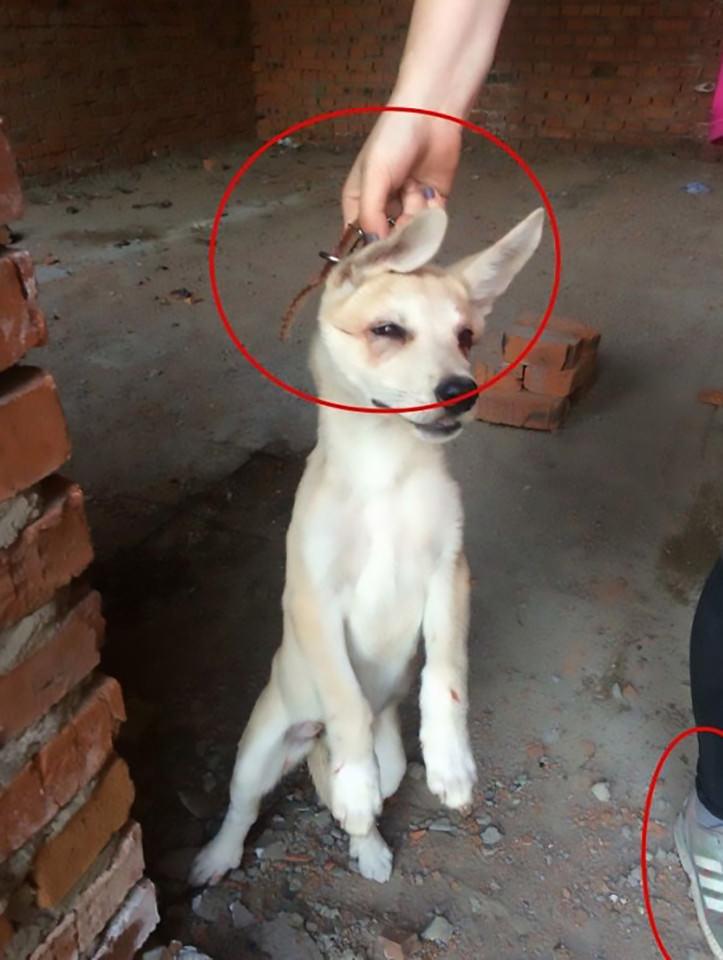 Ces deux filles torturent des chats et des chiens pour devenir célèbres sur Facebook...elles sont finalement arrêtées grâce à une pétition en ligne 2